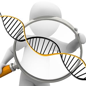 300-gen krótkiego snu